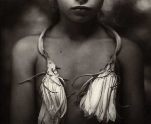 4-sally-mann-night-blooming-cereus